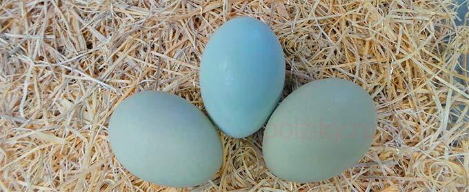 Сколько яиц сносят куры Арауканы