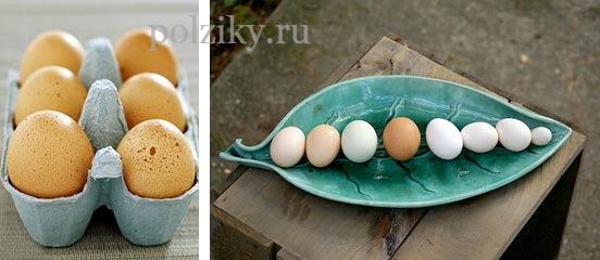 Чем полезно куриное яйцо