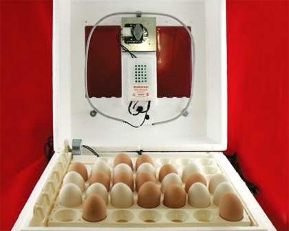 Правила инкубации яиц