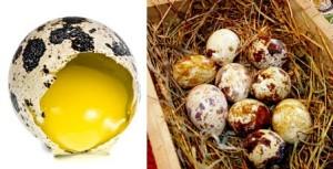 Перепелиное яйцо при гастрите детям