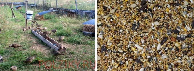Корм для фазанов