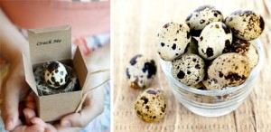 Вареные перепелиные яйца кормящим мамам