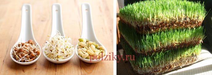 Натуральная витаминная добавка для бройлеров