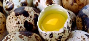 Польза перепелиных яиц для волос