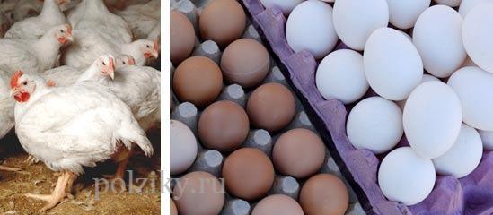 Яйца бройлеров для инкубатора
