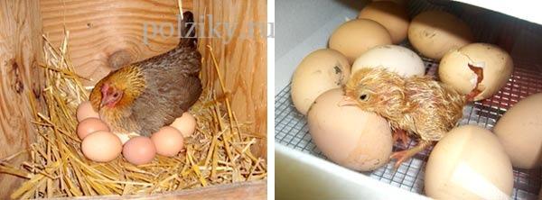 Экологически чистые фермерские продукты