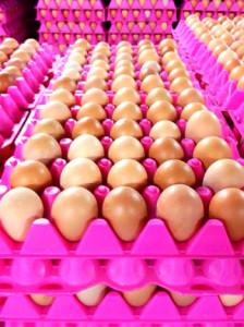 Какая цена на куриные яйца