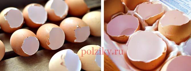 Скорлупа куриного яйца – ответы на вопросы