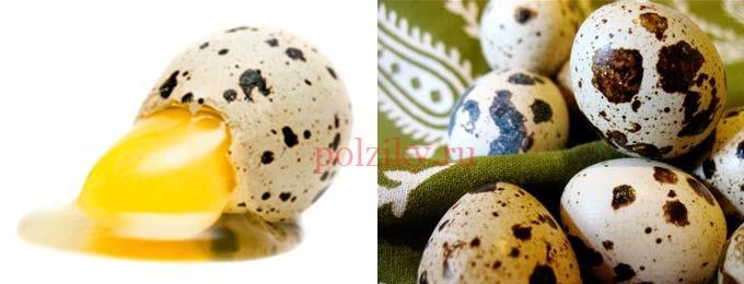 Есть ли польза от питья сырых перепелиных яиц