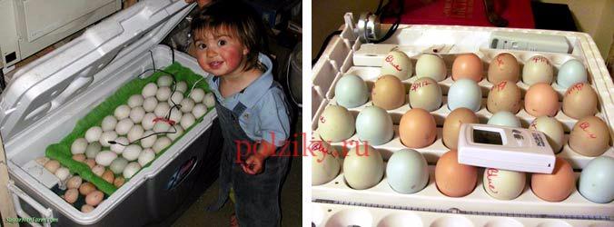 Какие требования к инкубационному яйцу кур