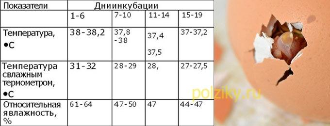 Инкубация куриных яиц — таблица температур и влажности