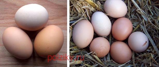 Внешний вид яиц Сукссексов