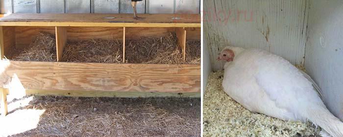 Гнездовая конструкция для индюшек