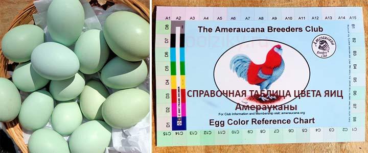 Какой расцветки могут быть яйца у Амерауканы