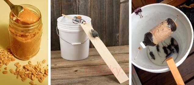 Как уничтожать мышей рядом с курятником