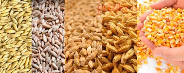 Какие зерновые выбирать курам