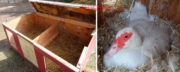 Как посторить гнездо для мускусной утки
