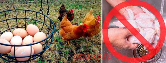 Можно ли есть мясо и яйца при сальмонеллезе у кур