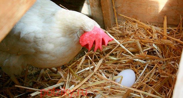 Подкладные яйца для кур и других птиц