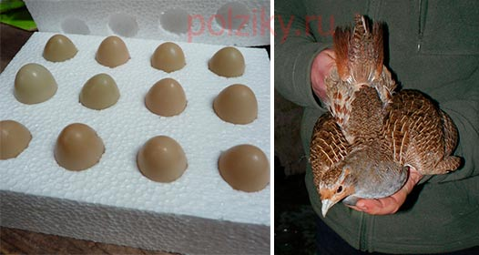 Яйца куропаток