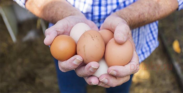 Какие куры самые яйценоские
