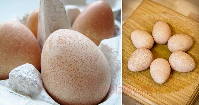 Какая польза цесариных яиц