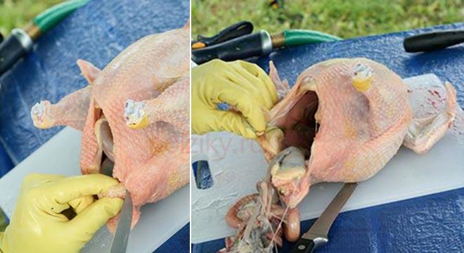Как почистить домашнюю курицу курицу