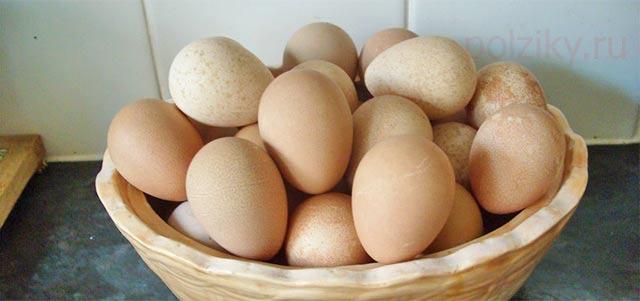 Чем полезны яйца цесарки